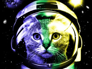 Matsui International Space Cat